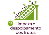 limpeza e despolpamento dos frutos